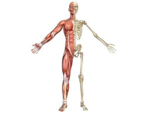 asthi dhatu kemik sağlığı