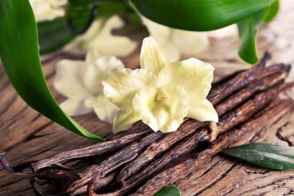 Vanilyanın Faydaları Nelerdir? Vanilya Yağı Neye İyi Gelir?