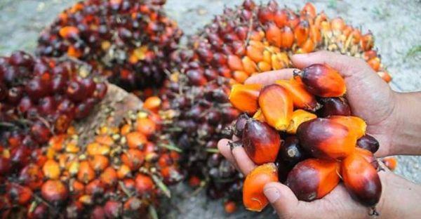 palm yağı zararları