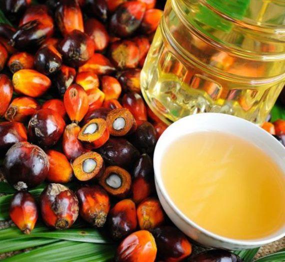 Palmiye Yağı Nedir? Faydaları Palm Yağı Zararları Neler?