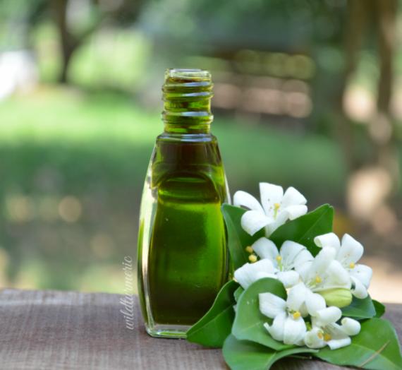 Bhringraj Oil Nedir? Yer Paskalyası Yağı Faydaları Neler?