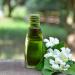 Bhringraj Oil Yer Paskalyası Yağı Bhringaraj Nedir Neye iyi gelir faydaları