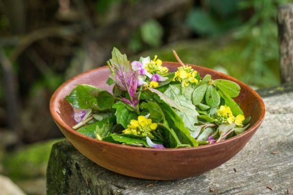 Kazayağı Otu Salatası Nasıl Yenir